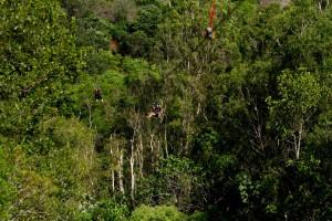 Cairns Adventure Park Flying Leap Mega zip line 16